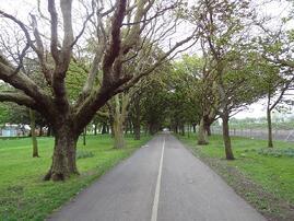TreePath1